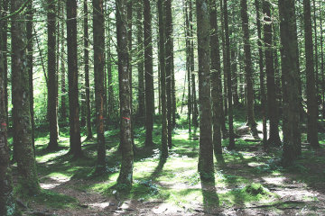photography forrest trees adventure summer