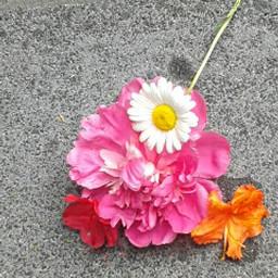 flowers happy freetoedit