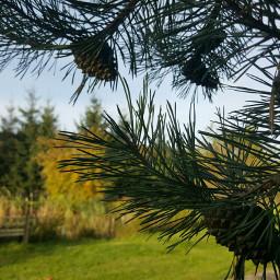 nature landscape naturephotography mygardenpics