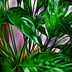 indoorplant colorful stfrancismainoffice loveandcare