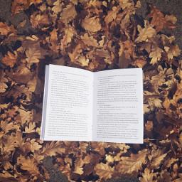leaves dpcleaves fall freetoedit